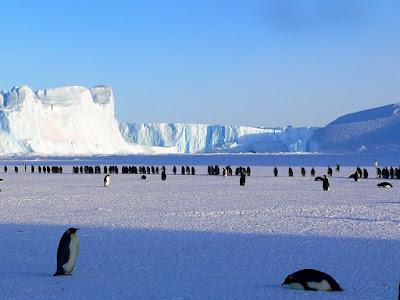 5 Hewan Paling Imut Yang Ada di Kutub