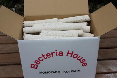 Momotaro Bacteria House