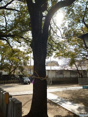 八王子神社ご神木