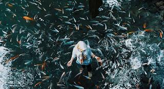 Ikan di mata air Senjoyo