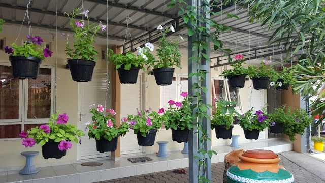 5 Jenis Bunga Hias Untuk Tanaman Gantung Percantik Rumah