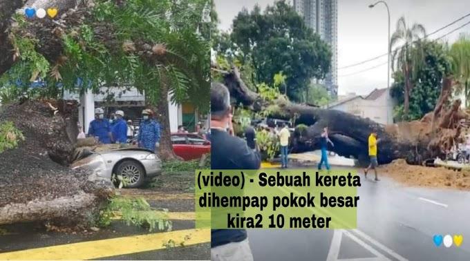 (Video) - Seorang pemandu maut di tempat kejadian selepas keretanya dihempap sebuah pokok besar