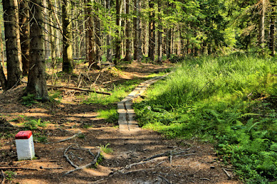 Hiking Loop around Złatna - Yellow Route