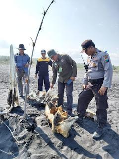 Tulang Bangkai Ikan Paus Dibawa Balai Konservasi Jatim