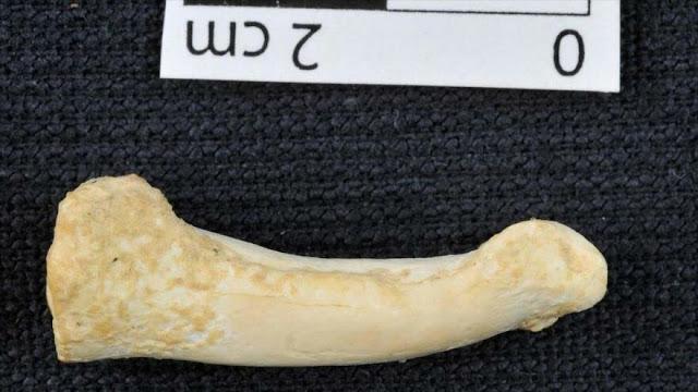 Hallan en España un collar neandertal de 39 000 años de antigüedad