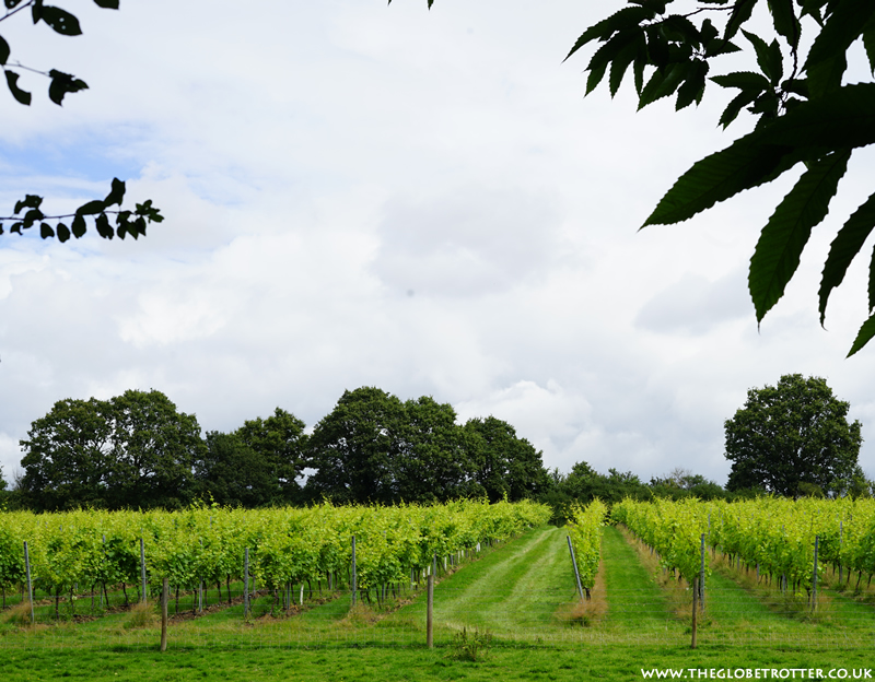 The Forty Hall Vineyard