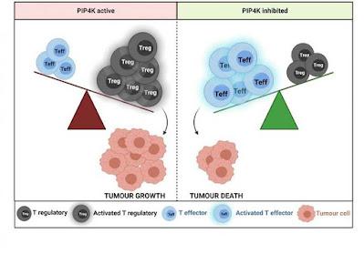 Diagrama-que-explica-os-efeitos-no-tumor