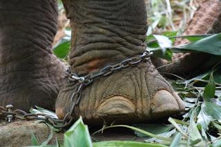 Jorge Bucay e la storia dell'elefante del circo
