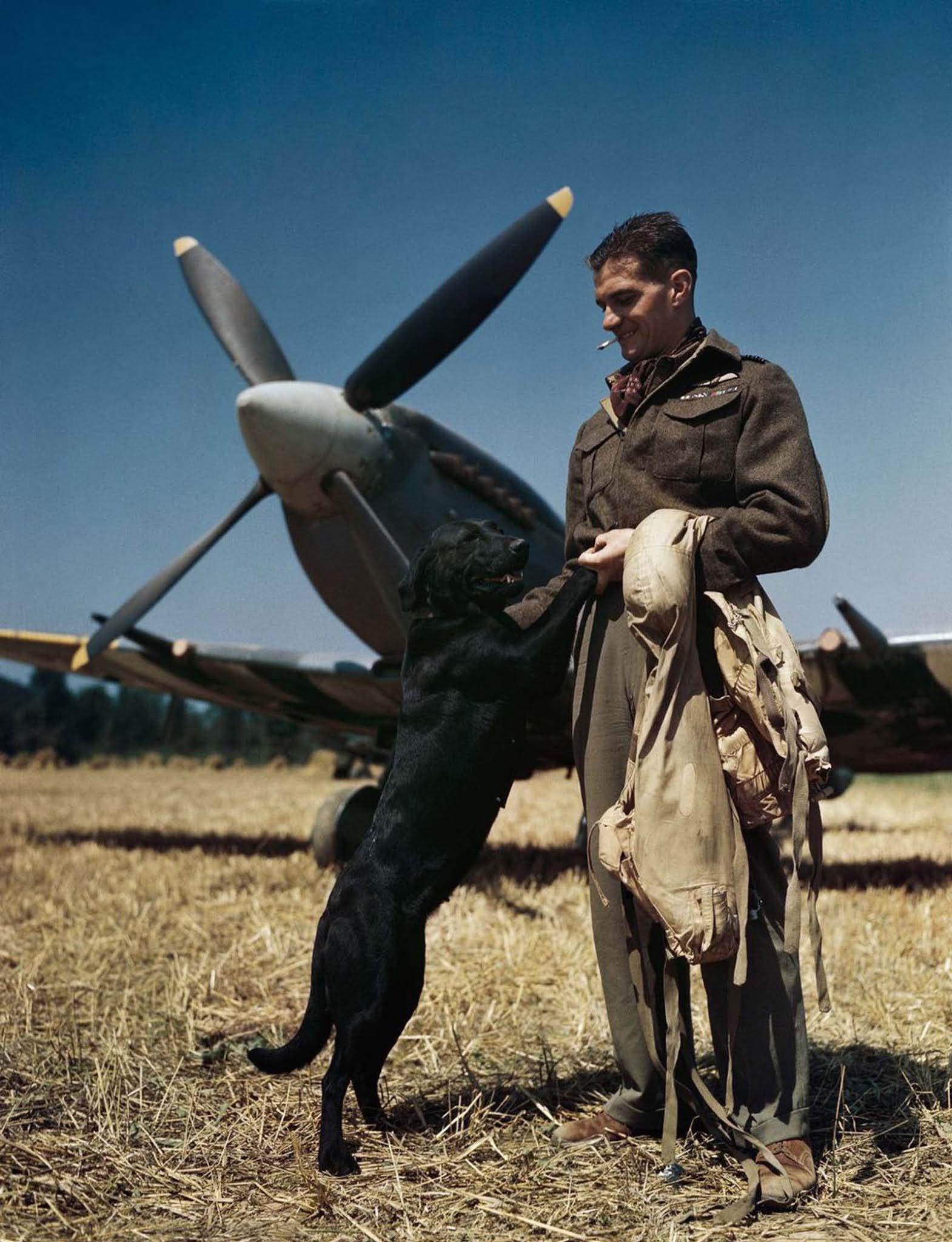 A RAF legeredményesebb vadászpilótája, James 'Johnnie' Johnson szárnyparancsnok Spitfire-jével és Labrador 'Sally' kisállatával Normandiában.  1944.