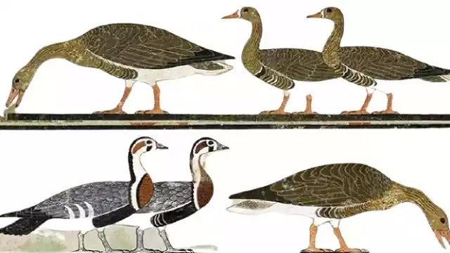 Geese of Meidum