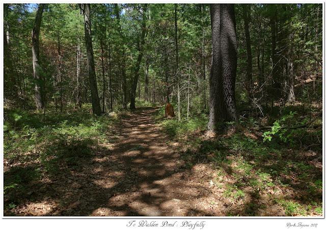 To Walden Pond: Playfully