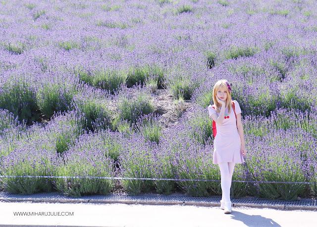 Visiting Hokkaido Lavender Fields