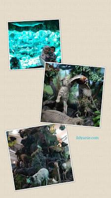 berfoto di rahmat wildlife museum gallery medan