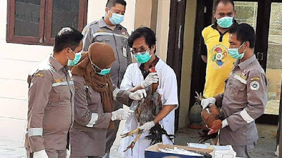 Puluhan Ayam Selundupan Asal Thailand Disuntik Mati di Aceh