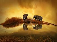 18 Fakta Menakjubkan Dari Gajah yang Membuat Tercengang