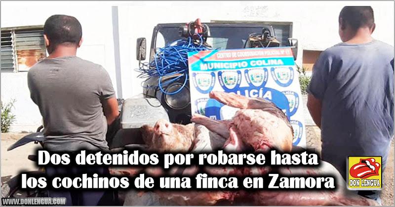 Dos detenidos por robarse hasta los cochinos de una finca en Zamora