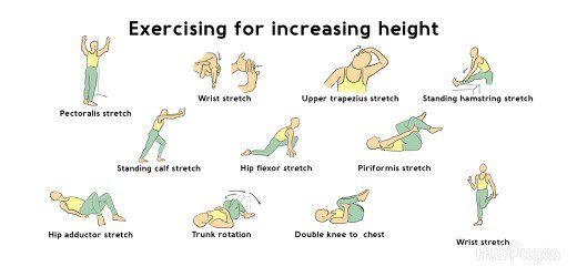 Height Increases Exercises