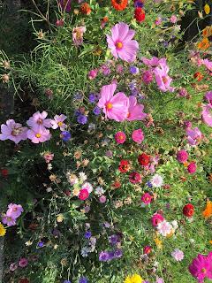 Wildflowers in various shades of purple, pink, and orange