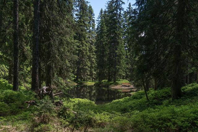 Waldwandern in Saalbach | Wanderung zu den Waldteichen am Maisereck | Saalbach - Maisalm - Wirtsalm - Waldteiche - Spielberghaus - Saalbach | Wandern-SalzburgerLand 11