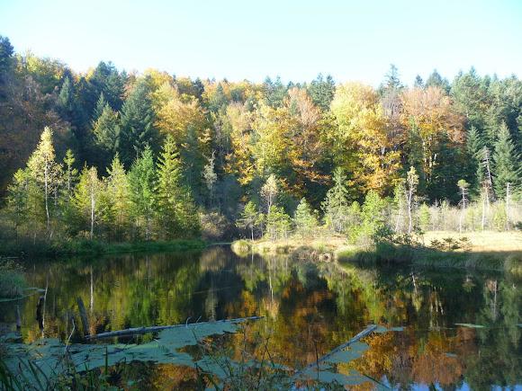 Национальный природный парк «Сколевские Бескиды». Журавлиное озеро