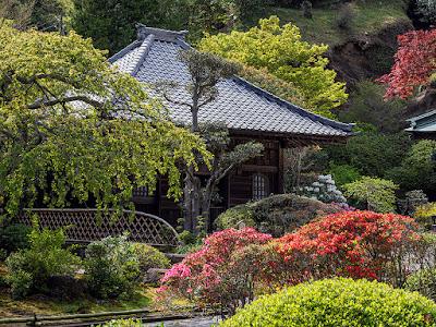 Tsutsuji (Rhododendron) flowers: Kaizo-ji
