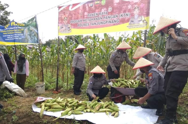 Panen Raya program Ketahanan Pangan Polres Tanjungpinang di Kampung Tangguh Nusantara Kampung Sidomulyo Tanjungpinang