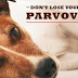 Canine Parvovirus Infection in Dogs