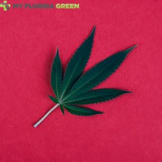 MedicalMarijuana Card PalmBay