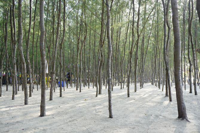 Kawasan Hutan Cemara di Pantai Wates Rembang