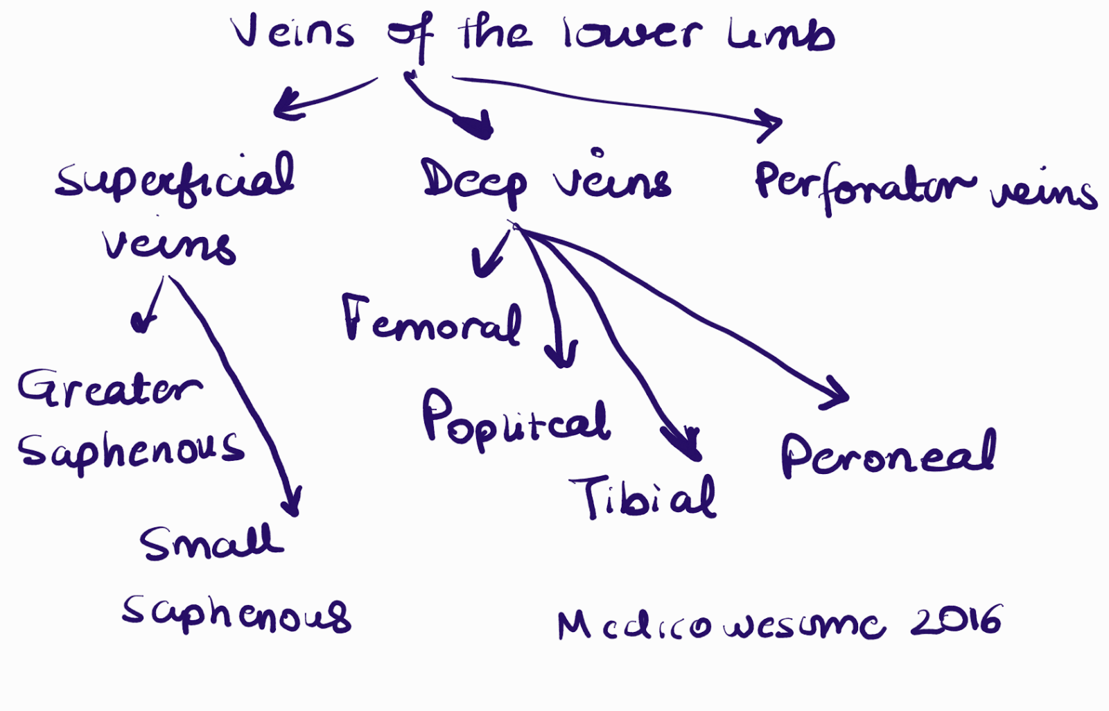Medicowesome Superficial And Deep Veins In Upper And Lower