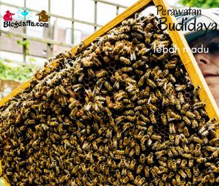 Perawatan Lebah Madu