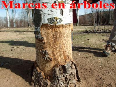 Marcas en árboles