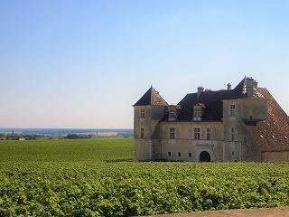 ブルゴーニュ地方のブドウ畑(フランス)写真
