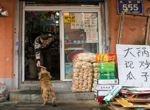 كلب ذكي يشتري طعامه بنفسه من السوبر ماركت