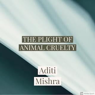 THE PLIGHT OF ANIMAL CRUELTY