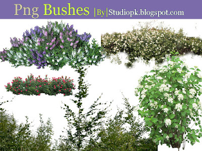 Png Bushes free download