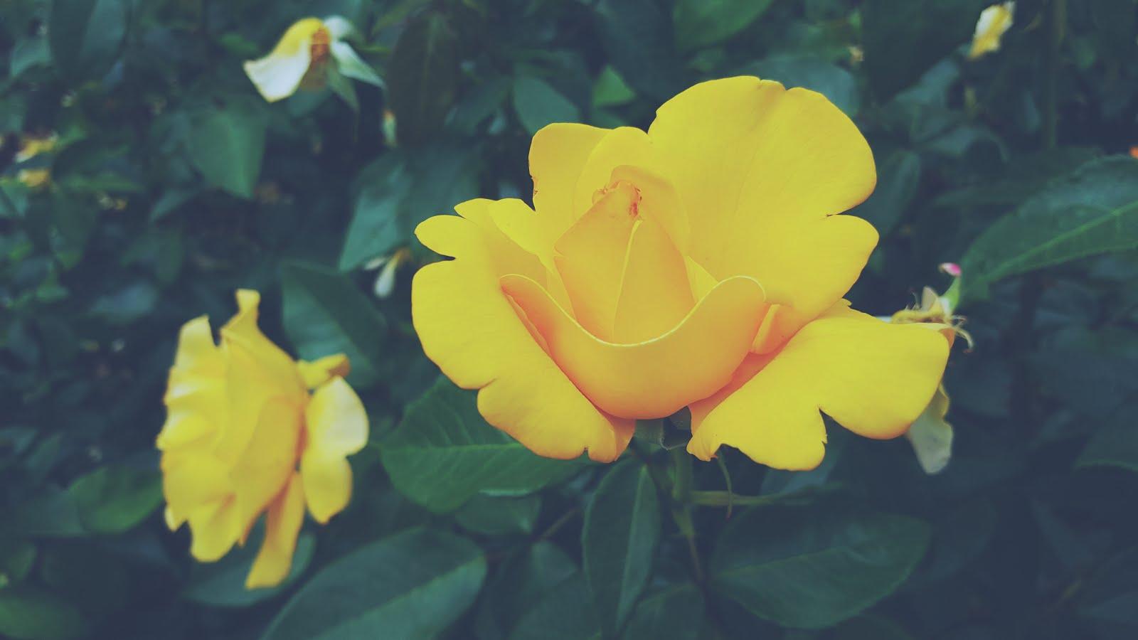 uk-lifestyle-blog-blooming-el