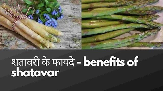shatavar ke 13 fayde - शतावरी के टॉप 13 फायदे और नुकसान