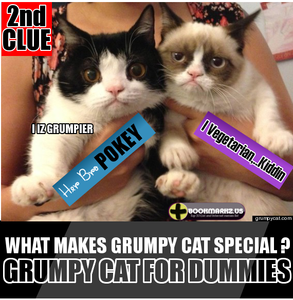 Grumpy Cat For Dummies, 5 Facts About Her