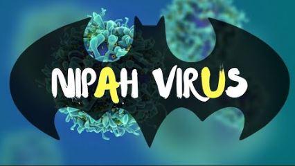 What is Henipavirus? Henipa virus infection | Healthy wiki How