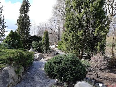 Havupuita ja havupensaita sekä kivipolku Hatanpään Arboretumissa