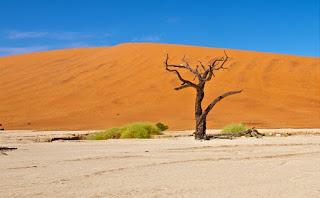 Menurut Peneliti Prediksi Bumi Akan Berubah Menjadi Padang Pasir Pada 2030
