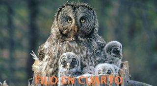 http://www.edu.xunta.gal/centros/iesames/aulavirtual/course/view.php?id=293