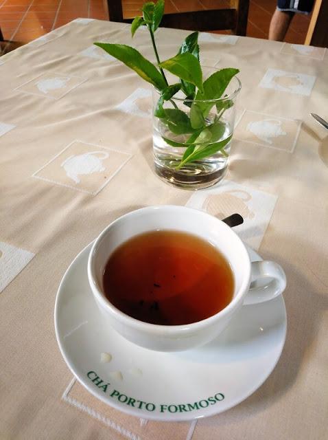 Té preto, una de las cuatro variedades de té que se producen en Azores