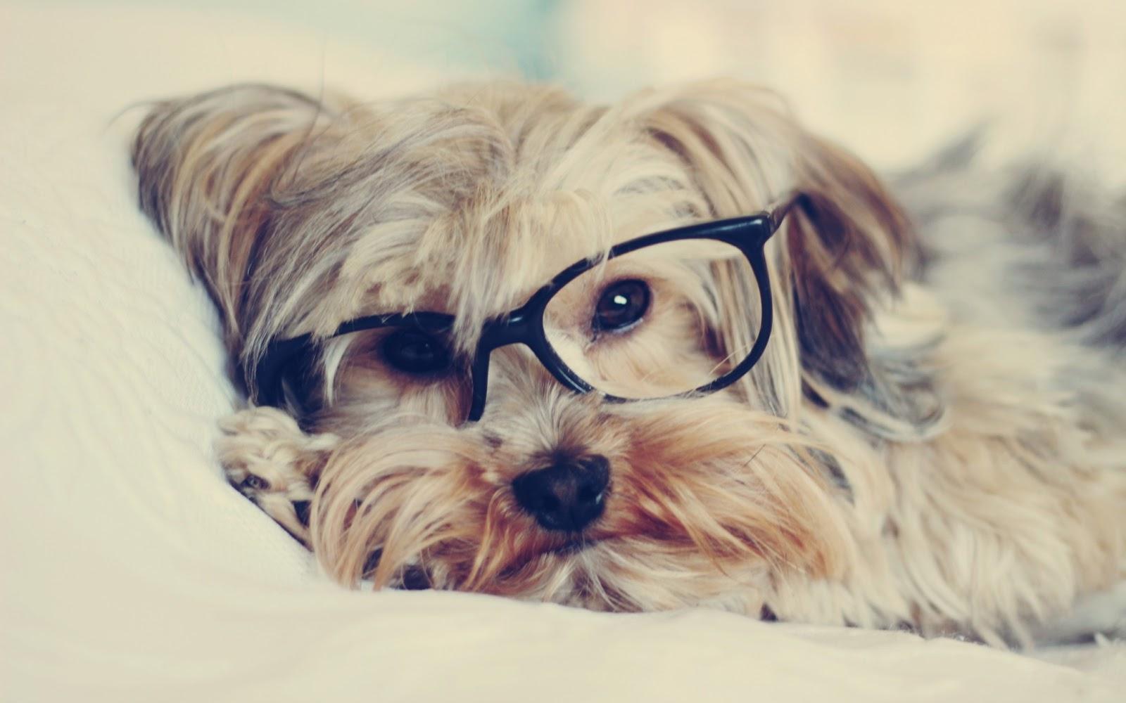 Imagenes y Wallpapers: Fondo de Pantalla Animales Gafas de