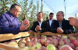 С кем Путин и Медведев ели яблоки в Ставрополье