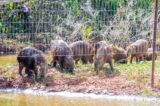 Pesquisa vai apurar situação de capivaras do Lago Paranoá