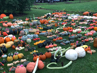 many different kinds of pumpkins and squash laid out in rows on a lawn