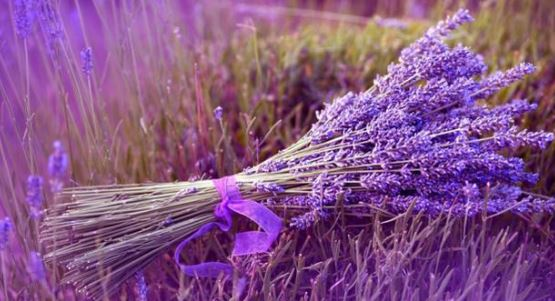 Detail the new 2-wing Lavender Dalat flower field with super beautiful view