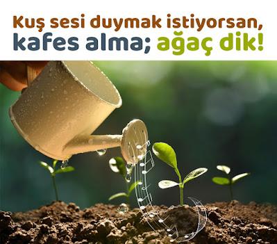 kuş sesi duymak istiyorsan kafes alma ağaç dik, ağaç dikmek, bitki sulamak, yeşil, doğayı koru yeşili sev, toprak, damla sulama, güzel sözler, özlü sözler, anlamlı sözler, günün sözü